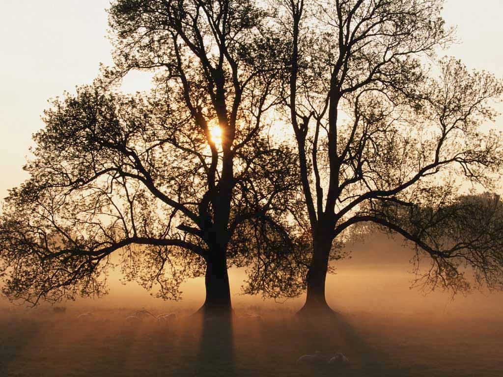 20140910135247-tree.jpg